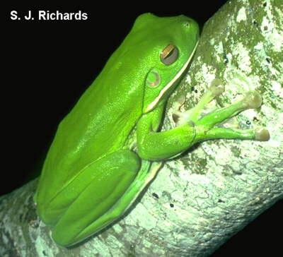 Frog Feet
